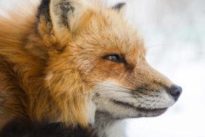 animal spirit online course from IEL Institute
